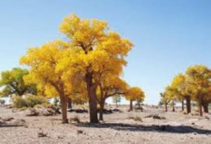 China's Jilin to afforest over 90,000 hectares of land