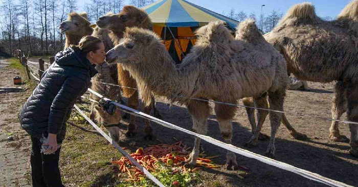 The show can't go on: Virus halts circus in Netherlands