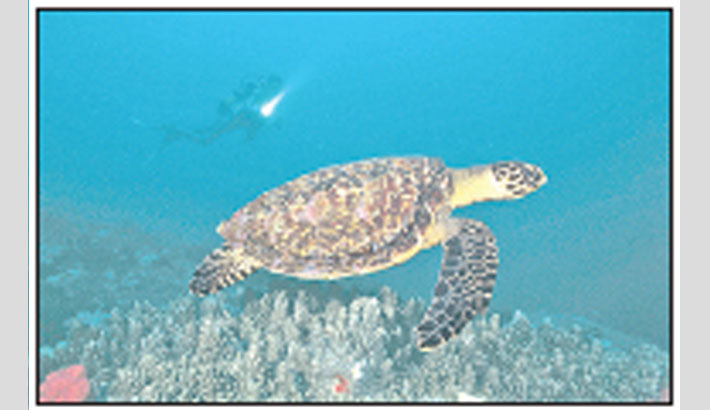 10 yrs to save 'world's most threatened sea turtle'