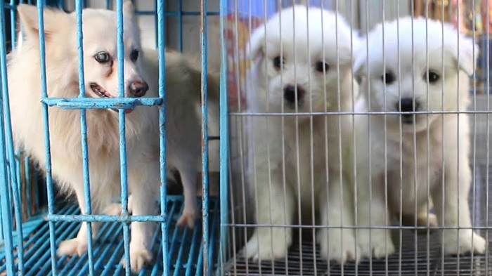 Don't be cruel to pet animals, Minister to Kataban shop owners
