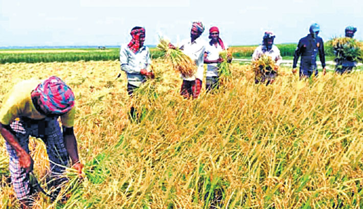 Haor dists to get machines for Boro harvesting