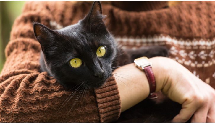 Pet cats in coronavirus-infected or self-isolating households should be kept inside