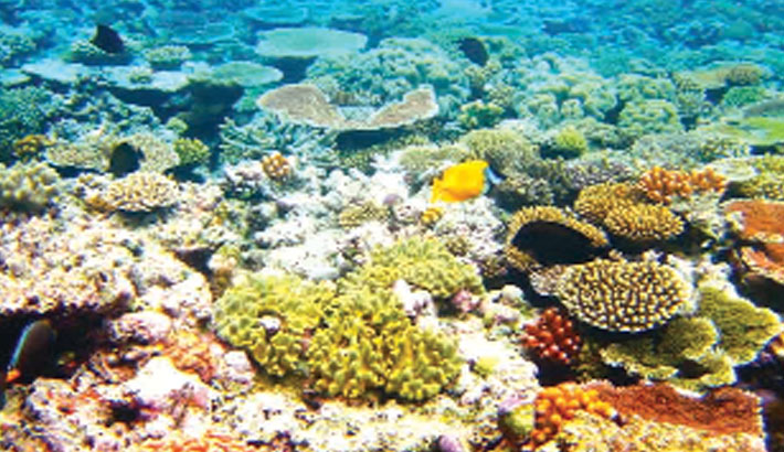 Great Barrier Reef suffers worst-ever coral bleaching