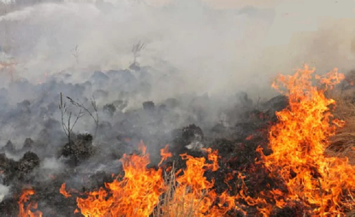 Huge fire ravages Poland's largest nature reserve