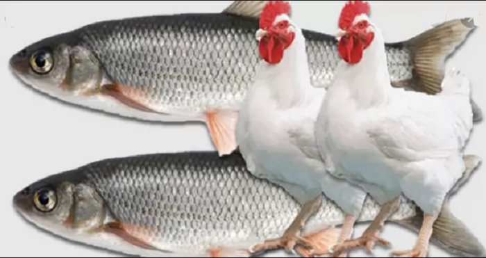 Ministry sells fish, poultry worth Tk 47 crore in one day
