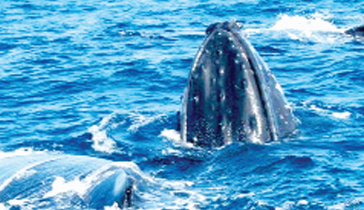 Man fined for rescuing whale from sea nets