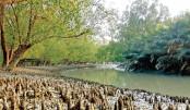 Sundarbans resists cyclone as savior