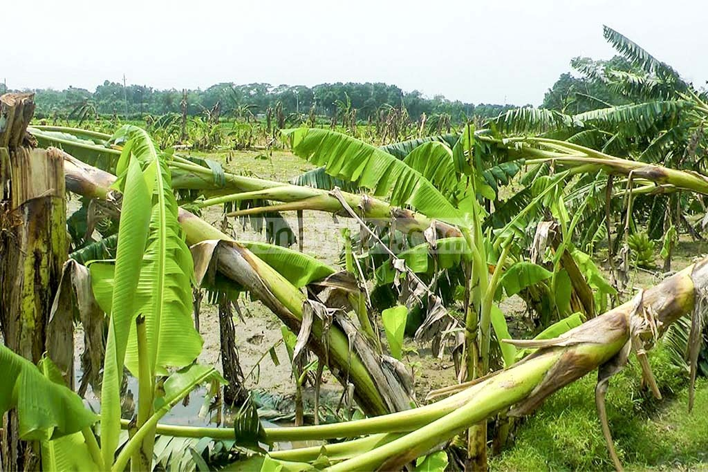 Cyclone Amphan: Bagerhat suffers losses worth Tk 400cr
