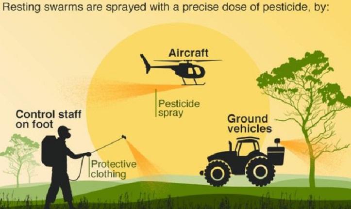 India faces worst locust attack amid Covid-19 pandemic
