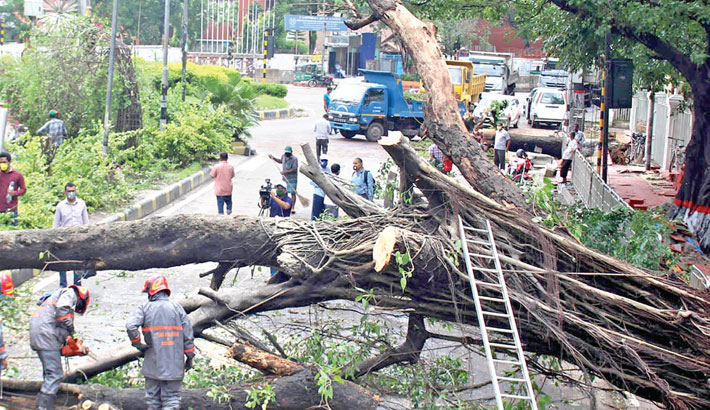 Firefighters work to remove a large tree