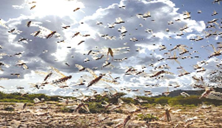 Rajasthan, Madhya Pradesh employ drones to kill locusts