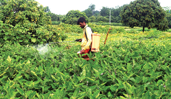 A farmer, without wearing a face mask, sprays pesticide on a vegetable