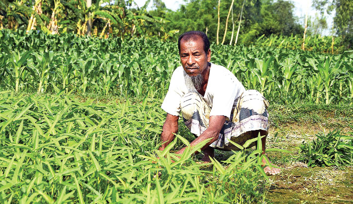 A farmer is harvesting water spinach