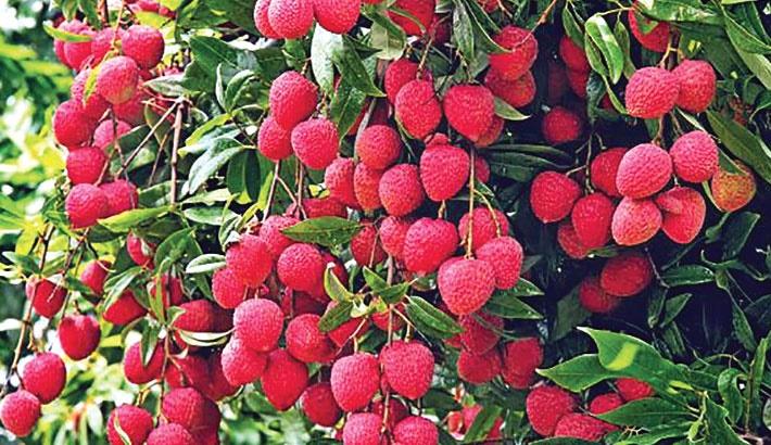 Juicy lychee hits city markets