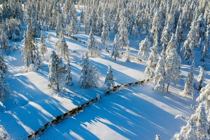 Climate change forces Sami reindeer herders to adapt