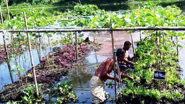 Vegetable farming on floating beds gets popular in Sylhet