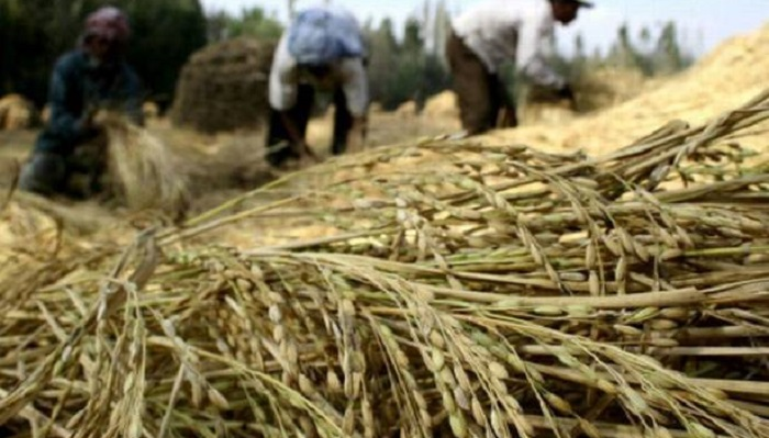 Coronavirus eats up Tk 565b from agriculture sector