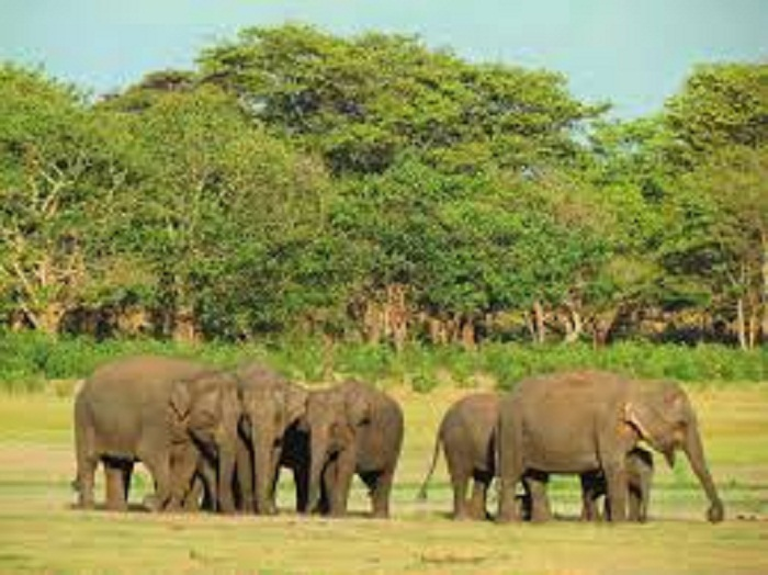 Kurigram farmers worried over crops damage by Indian elephants