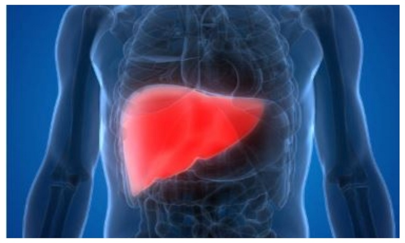 Why women are less likely to die of liver cirrhosis than men?