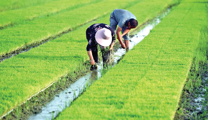 China posts greener agri growth: Report
