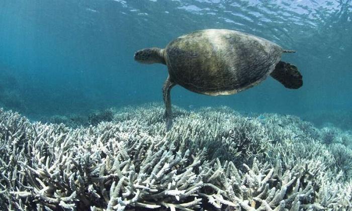 Ocean geoengineering tests violate UN convention: green groups
