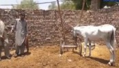 Donkey arrested on charge of gambling in Pakistan