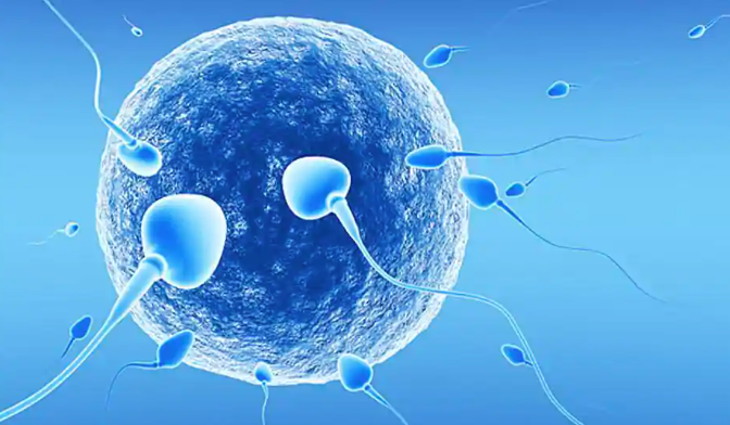 Human eggs prefer some men's sperm over others, claims study