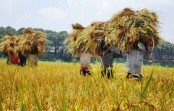 Agriculture sector gets Tk 16,437 crore budget allocation