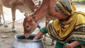 World Vision Bangladesh supports cash grants over 18,000 families worth BDT 6.5 crore