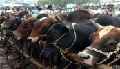 Country has 1crore 9 lakh 42,500 sacrificial animals this year