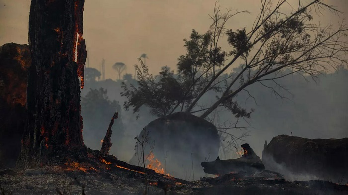 Brazilian Amazon sees worst June in 13 years for forest fires