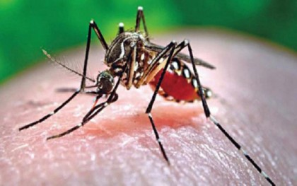 Preventive measures let no death from dengue this year