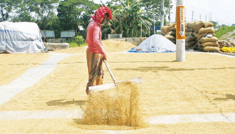 Boro farmers' profit drops 40pc