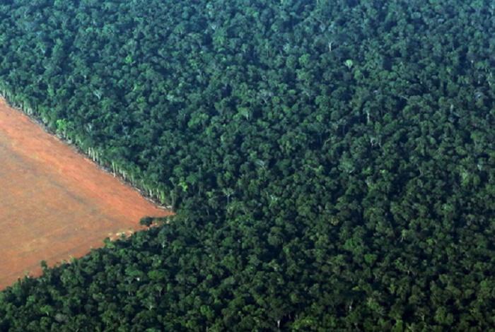 Investors want 'results' on deforestation: Brazil VP