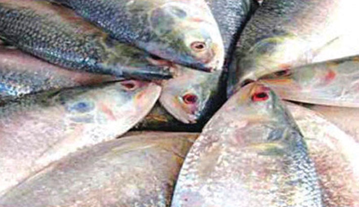 'Hilsa will be tastier as lockdown cleans up rivers'