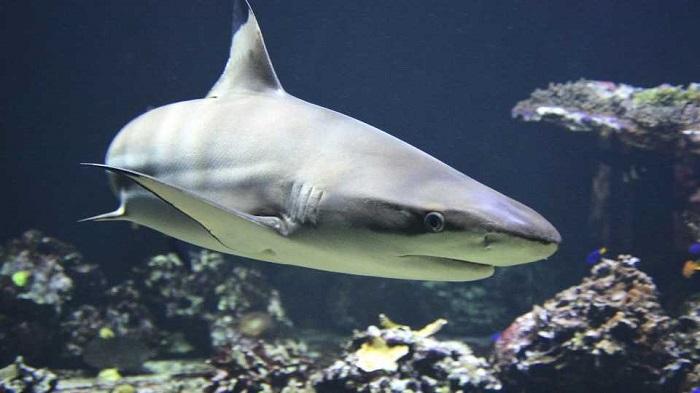 Teenage surfer killed by shark in Australia