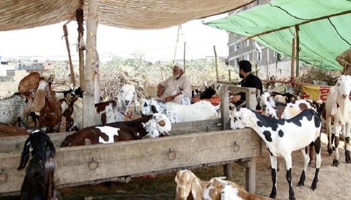 Pakistan banning open-air cattle markets