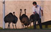 Brazil President bitten by large bird during