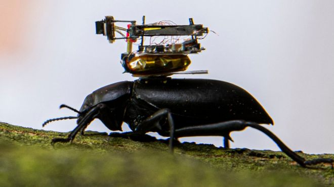 Beetle-mounted camera streams insect adventures