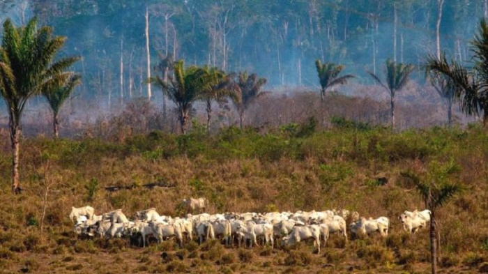 Amazon soya and beef exports 'linked to deforestation'