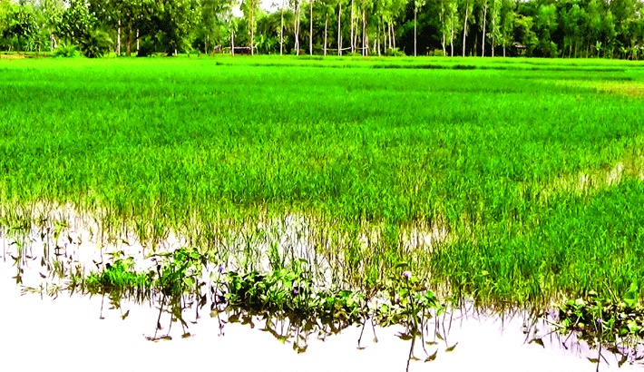 Flood hits agriculture production