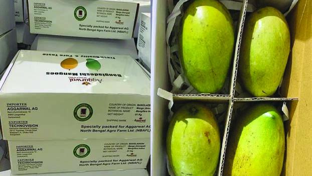 North Bengal farm starts exporting Rajshahi's mangoes to European markets