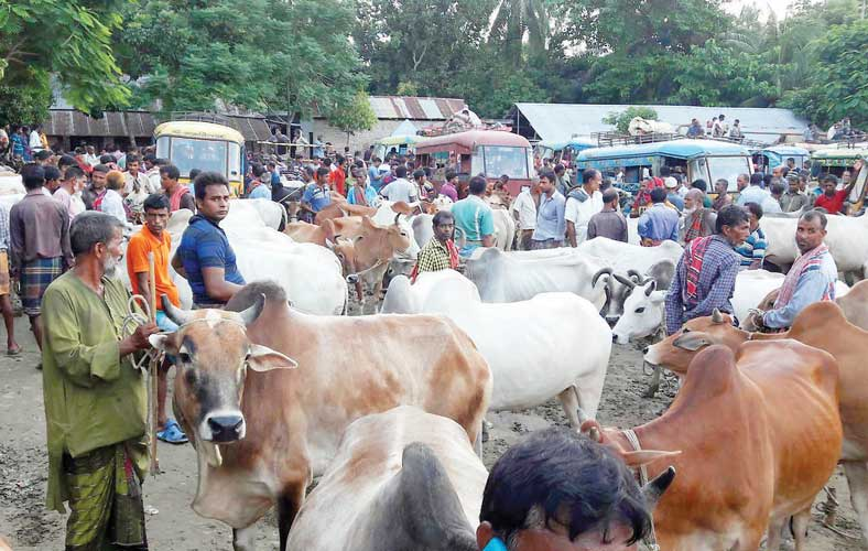 Rural cattle markets see poor sale