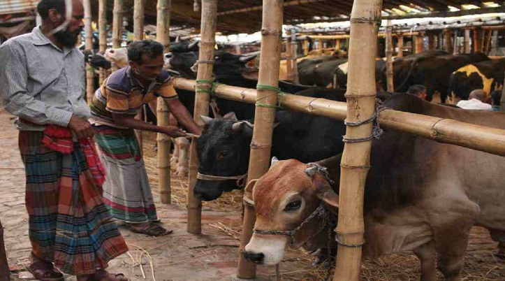 8 teams to monitor cattle markets in city