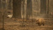 Australia's fires 'killed or harmed three billion animals'