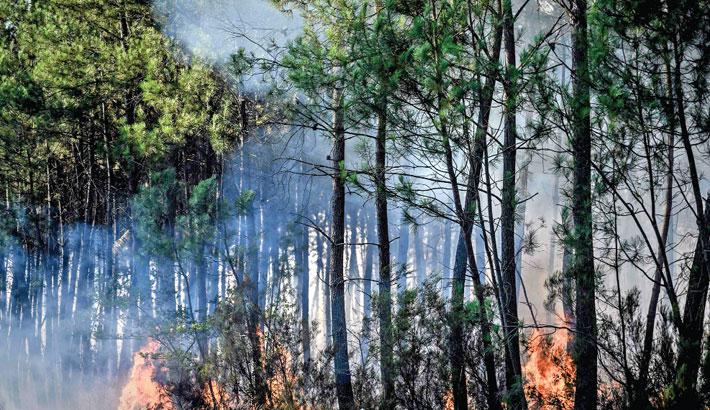 The photo shows trees on fire near Le Tuzan