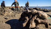 Woolly mammoth skeleton found in Russia's Arctic lake