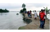 Padma devours 50 homesteads, school building in Shariatpur