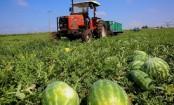 Israeli researchers develop method to turn watermelon waste into fuel