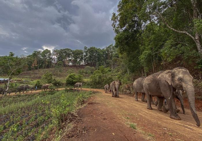 Habitat loss sparks cascade of ecosystem damage: study